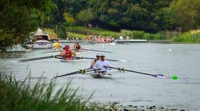 Aviron sur la rivière Ouse à St Neots un jour ensoleillé Images libres de droits