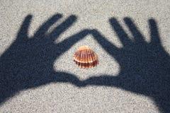 Avis de seashell image stock