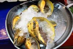 Aviso del caracol de mar para la venta en mercado fresco en Tailandia Fotografía de archivo