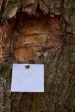 Aviso en blanco de la hoja de papel sticked a la corteza del árbol imagenes de archivo