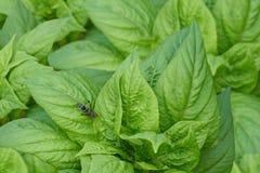 Avispón en la hoja vegetal verde imagen de archivo