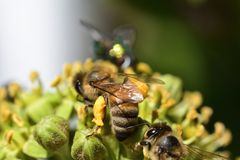 Avispón y abeja en la flor Imagen de archivo libre de regalías