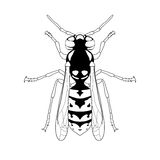 Avispa Bosquejo de la avispa Avispa en blanco Imagen de archivo libre de regalías