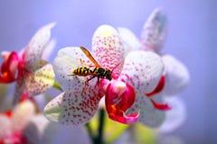 Avispa en la flor Foto de archivo