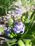 Avispa en la flor imagen de archivo