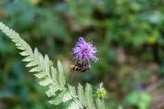 Avispa en la flor púrpura Fotos de archivo libres de regalías