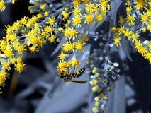 Avispa en las flores del prado Fotografía de archivo libre de regalías