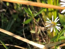 Avispa en una flor Fotos de archivo libres de regalías