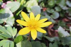 Avispa en una flor Fotos de archivo