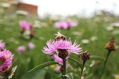 Avispa en una flor Fotografía de archivo