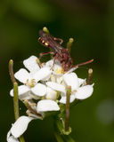Avispa encaramada en una flor Imagen de archivo libre de regalías