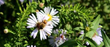 Avispa magnífica y flor hermosa contra la perspectiva de la hierba foto de archivo libre de regalías