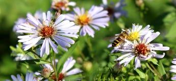 Avispa magnífica y flores hermosas contra la perspectiva de la hierba fotos de archivo
