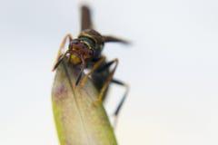Avispa que alimenta desde una planta Foto de archivo libre de regalías