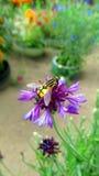 Avispa que se sienta en una flor Imagen de archivo