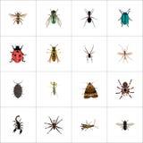 Avispa realista, arácnido, Midge And Other Vector Elements El sistema de símbolos realistas del insecto también incluye la hormig libre illustration