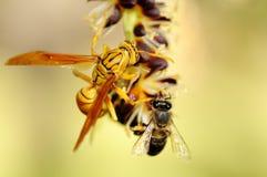 Avispa y abeja Fotografía de archivo libre de regalías