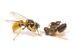 Avispa y abeja Foto de archivo libre de regalías
