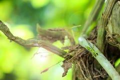 Avispas verdes en el jardín con el fondo de la luz del sol y de la naturaleza Imagen de archivo