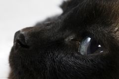 Aviste el gato Fotos de archivo libres de regalías