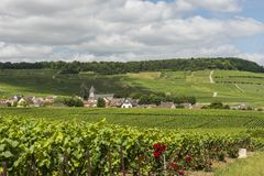 Avize in Champagne District Frank Bonville Fotografia Stock