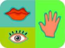 Avkänningarna av touchen; smak; och sight Royaltyfri Illustrationer
