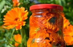 Avkok, te och avkok av blommor av calendulaen - vård- drink Royaltyfri Bild