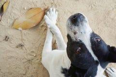 Avkopplad hund på sandstranden, Arkivfoto