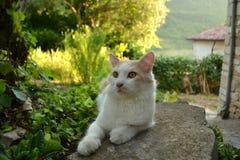 Avkopplad katt i trädgården Royaltyfri Bild