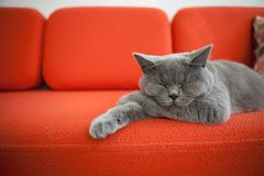 Avkopplad katt på en soffa royaltyfri bild