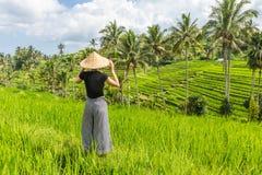Avkopplad trendig caucasian kvinnlig turist som b?r den lilla ryggs?cken och traditionella asiatiska risf?lthatten som ser h?rlig fotografering för bildbyråer