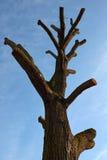 Avkortat träd Royaltyfri Foto