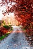 Avlägsen väg i Provence, Frankrike Arkivbilder