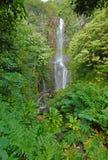 Avlägsen vattenfall i rainforest i Hawaii Royaltyfri Fotografi