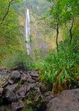 Avlägsen vattenfall i rainforest i Hawaii Royaltyfri Bild