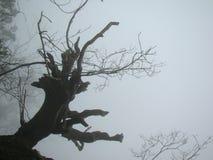 Avlägset berg som täckas i mist Arkivfoto