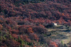 Avlägset hus i skogarna av Provence, Frankrike Royaltyfria Foton