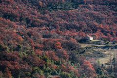 Avlägset hus i skogarna av Provence, Frankrike Royaltyfri Bild
