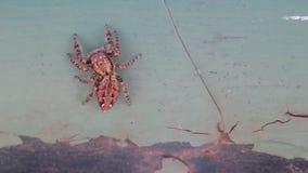 Avlägsna för spindel stock video