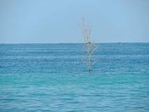 Avlövad trädstam som står stark på sjöbotten Fotografering för Bildbyråer