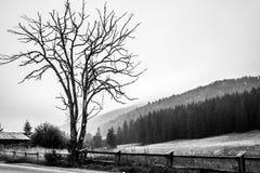 avlövad tree Arkivbild