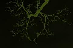 Avlövad Treefilial Arkivfoton