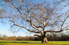 avlövade 6 inga trees Arkivbilder