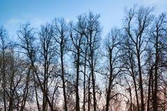 Avlövade kala träd över blå aftonhimmel Fotografering för Bildbyråer