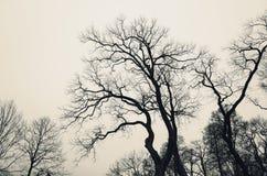 Avlövade kala träd över grå himmel royaltyfri foto