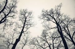 Avlövade kala träd över grå himmel monokrom arkivbilder