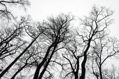 Avlövade kala träd över grå himmelbakgrund arkivbild