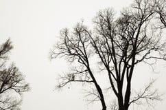 Avlövade kala träd över grå himmelbakgrund Royaltyfria Bilder