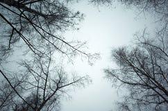 Avlövade kala träd över himmelbakgrund Royaltyfri Foto