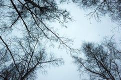 Avlövade kala träd över himmelbakgrund Fotografering för Bildbyråer